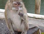 Quiz on monkeys (1-13)