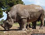 The rhino quiz (1-28)