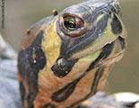 Quiz on Tortoises (1-24)