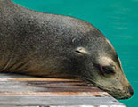 The quiz on Sea Lions