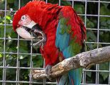 Le Quiz du trafic des Animaux Sauvages (1-30)