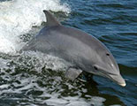 The quiz on Dolphins
