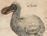 The quiz on Dodos