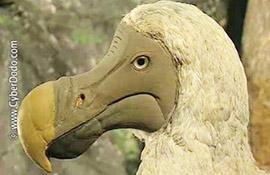CyberDodo y los dodos (1-2)