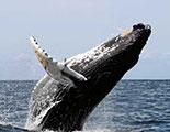 Le quiz des Baleines (1-10)