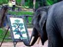 The elephant Picasso..