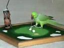 An intelligent bird