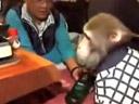 Monkey Server